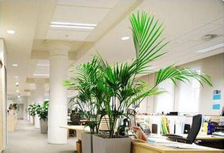 办公室家具与办公环境展示